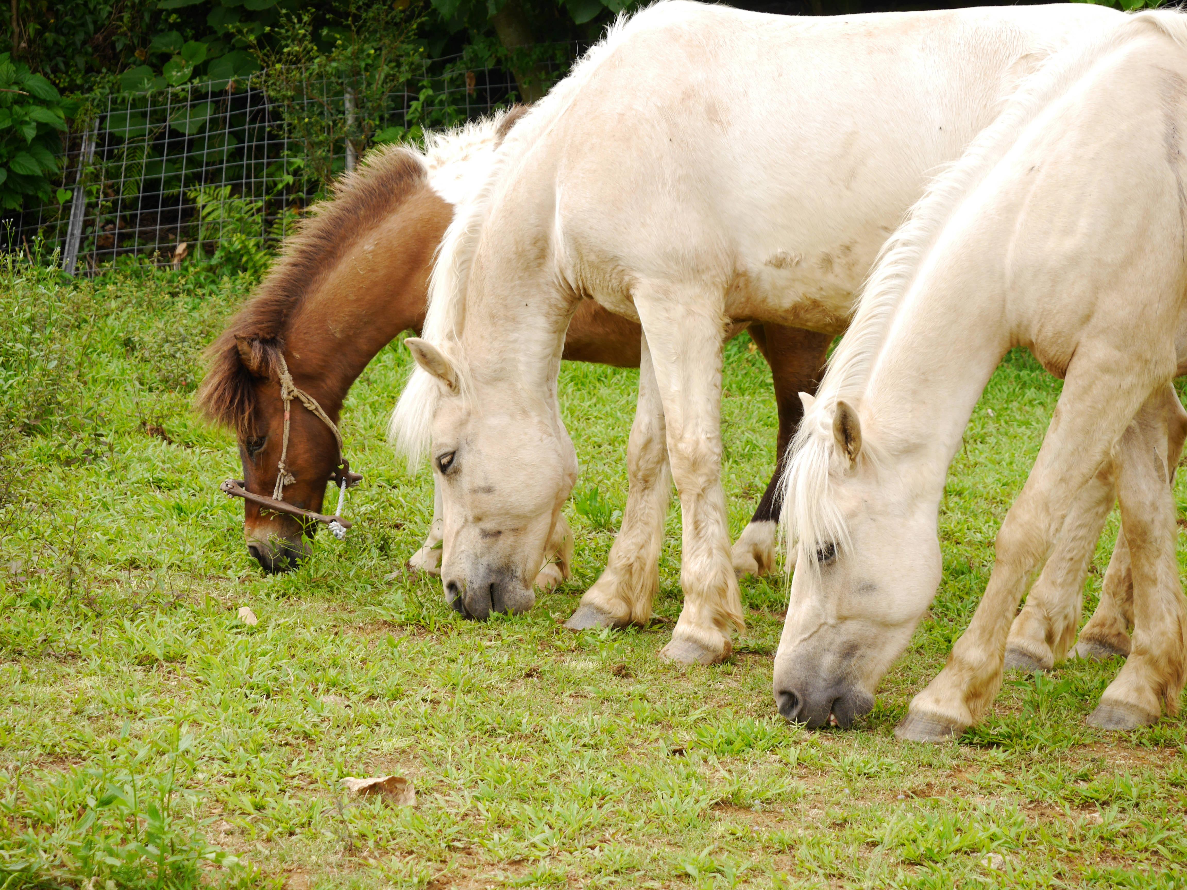 南は沖縄、北は北海道まで、日本在来種の血統をもつ馬たちが迎えてくれる
