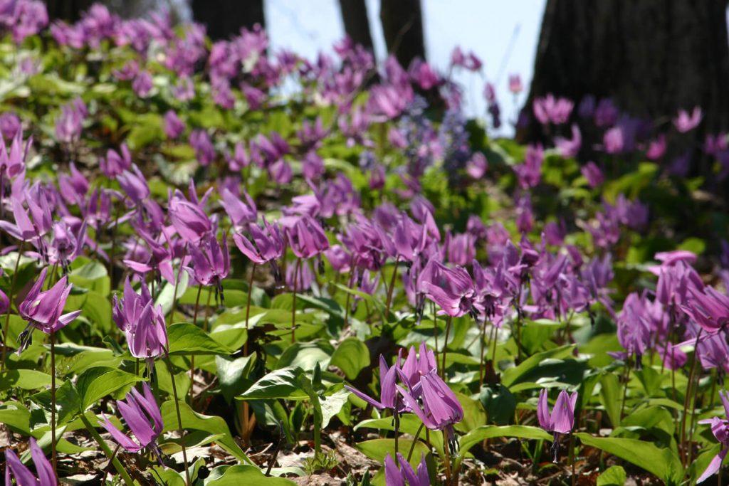 春こそ旭川を楽しもう!4・5月におすすめの旭川観光スポット5選