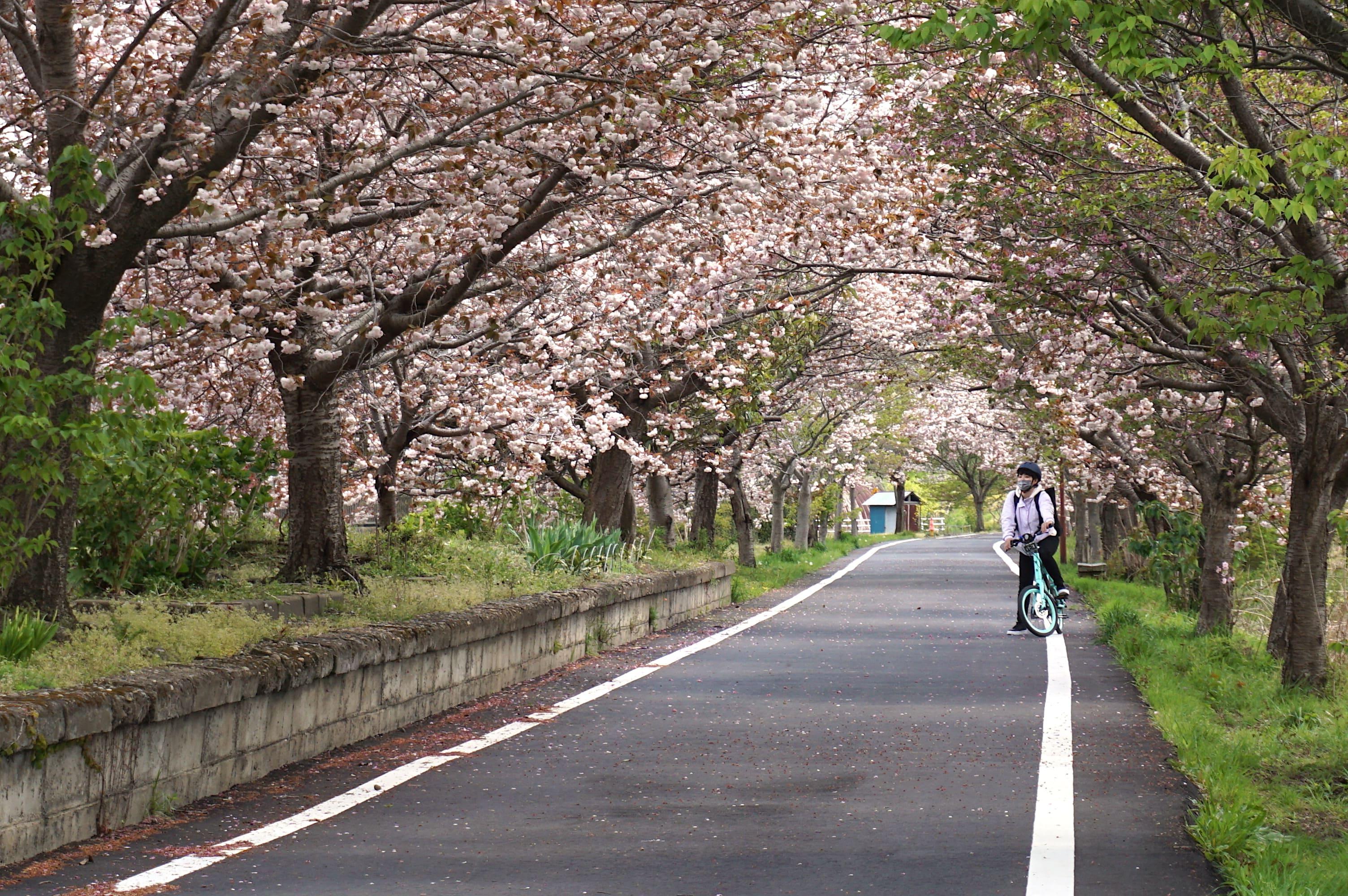 平坦で安心安全コース。春はお花見気分も味わえる。
