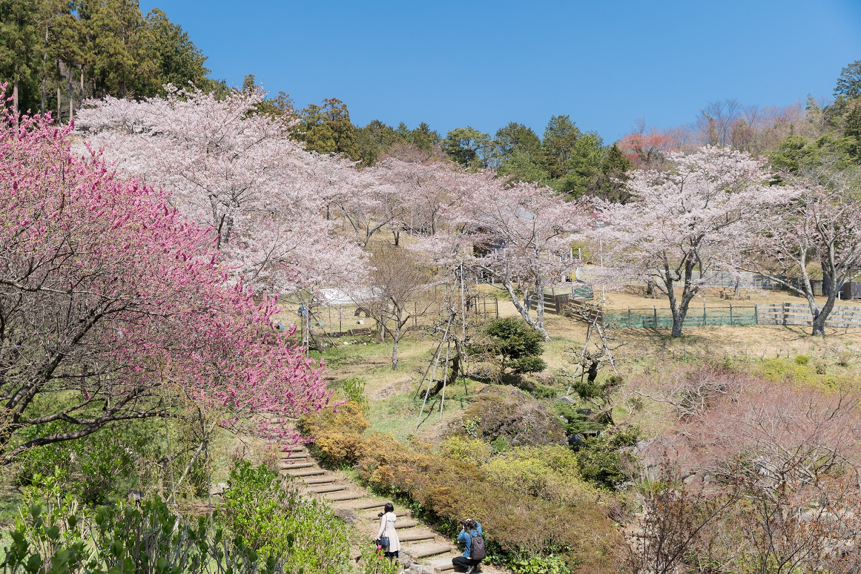 花桃の濃いピンクと桜の薄紅色が織りなす美しいグラデーション