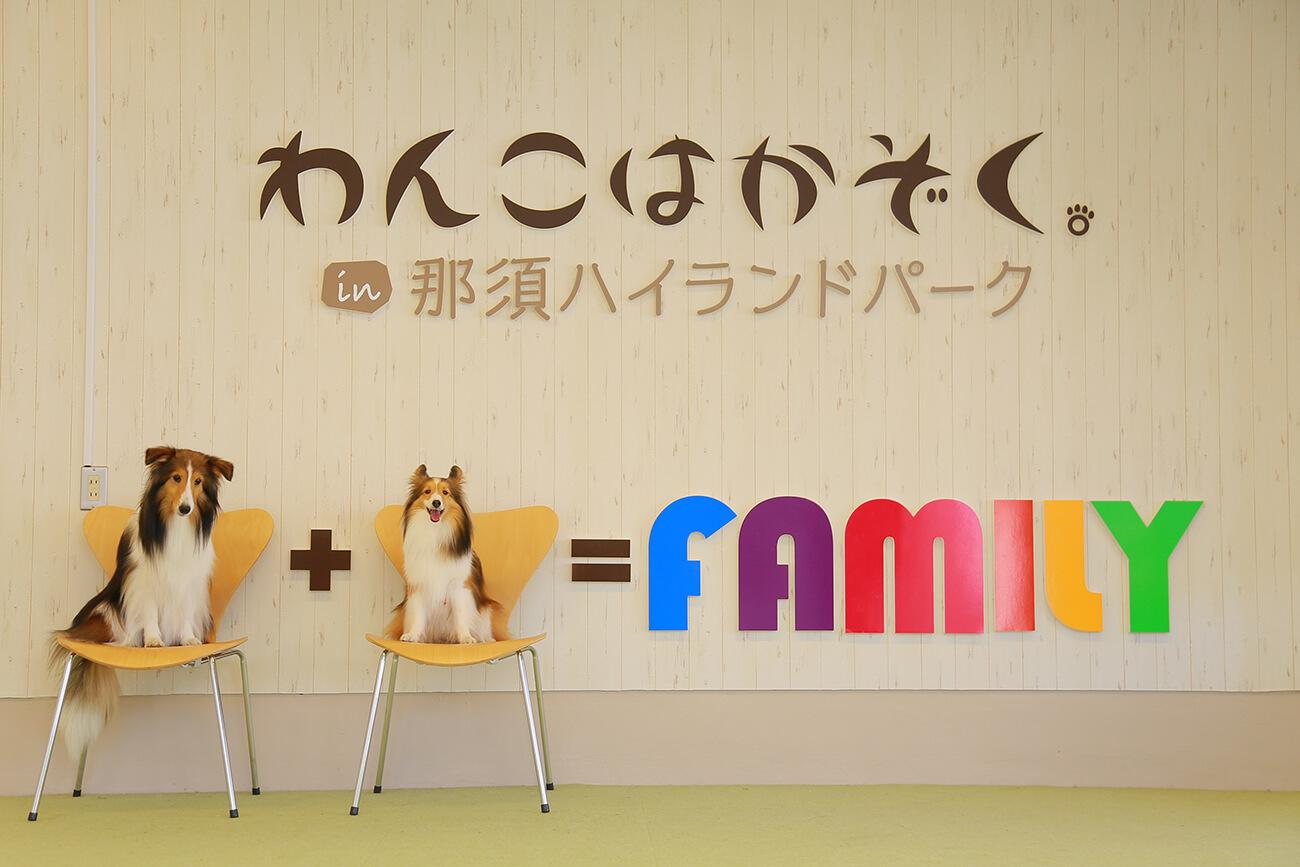 小型犬用室内ドッグランには、かわいいフォトスポットも