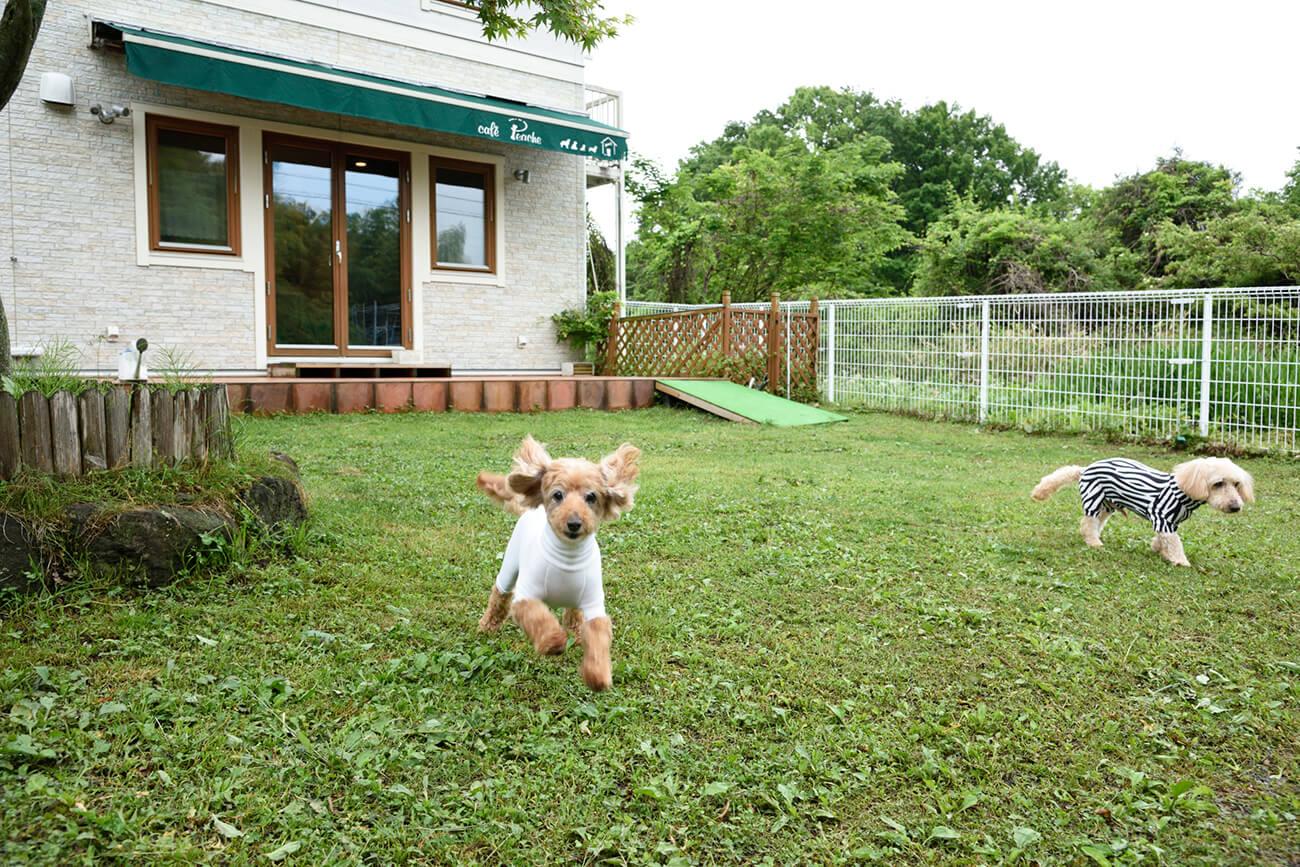 芝生の庭「わんこ広場」にペットも大喜び