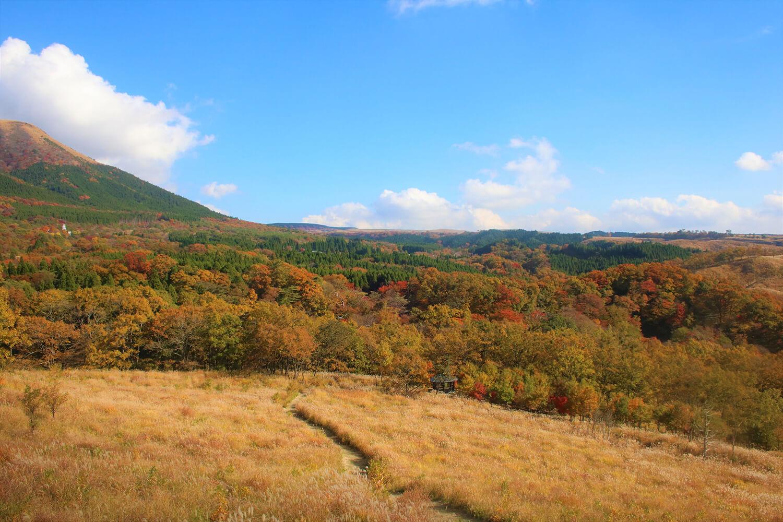 清流の森の中にある「恋人たちの丘・平野台高原展望所」からの景色。ススキで黄色く染まった草原とパノラマの紅葉が圧巻 ©️南小国町