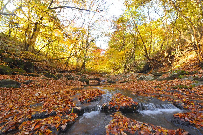 滝まで遊歩道が整備されていますが、ほぼ手つかずの景色が残されている渓谷
