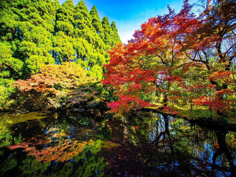 隼鷹天満宮の参道から池や庭園を望む様子。透き通った湧水の池に木々が美しく映る。四季折々の美しさを持つ庭園