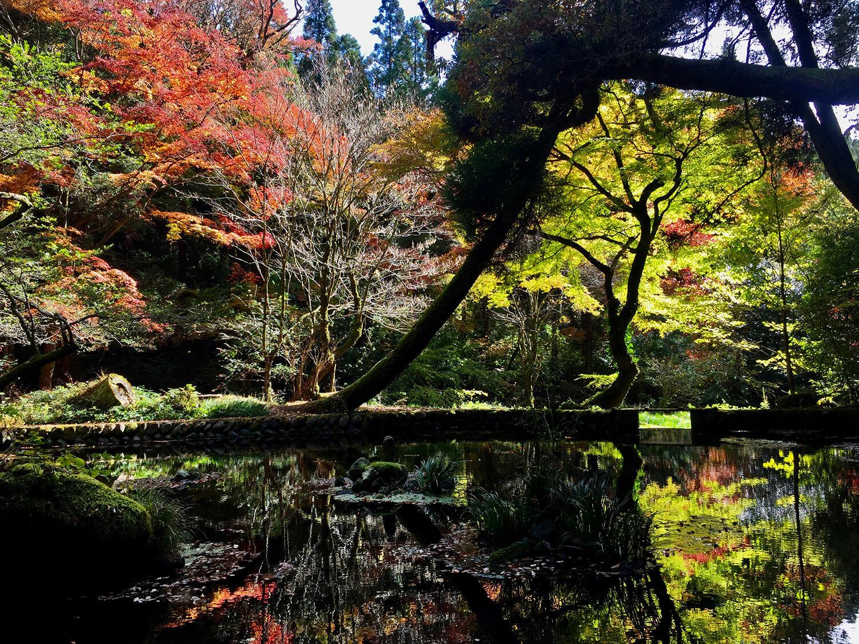 水面に紅葉が投影されて、神秘的な景色を作り出す
