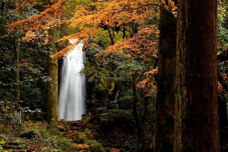 苔に包まれた静かな森の中に、美しい滝が現れる