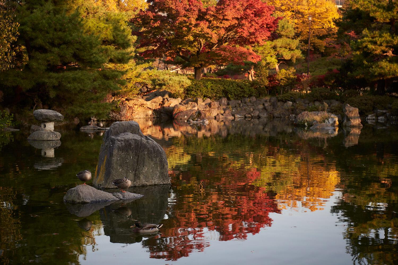 色鮮やかなイチョウやモミジの先に美ヶ原の山々が広がり、水面に映る鏡面紅葉にも目を引かれる