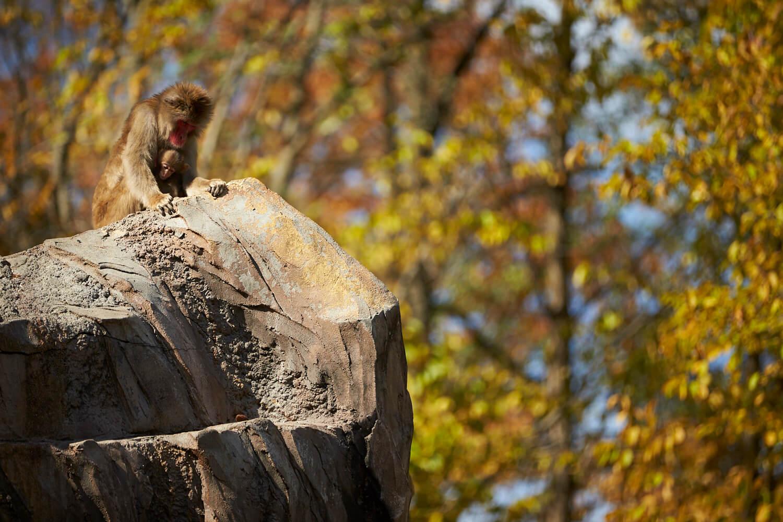 動物園「小鳥と小動物の森」などがあり、紅葉のなか、総合的なレクリエーションの場として一日中楽しめる