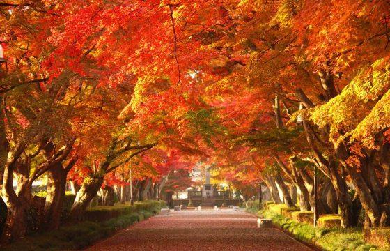【2021年版】那須・那須塩原で楽しみたい紅葉スポット9選