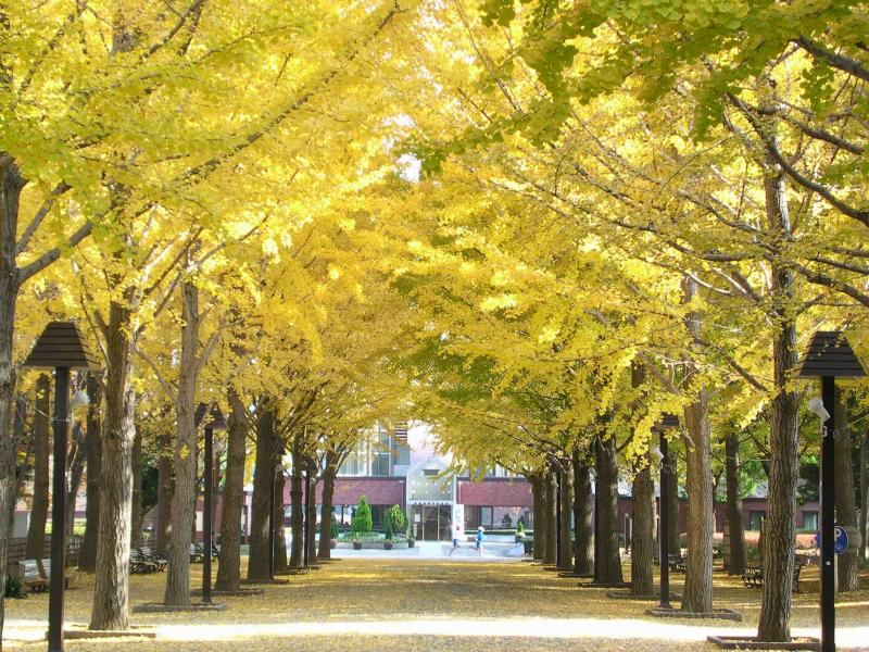 ベンチに座れば、イチョウ並木の下で黄色の絨毯をゆっくり満喫することができる