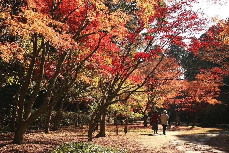 偕楽園は「民と偕(とも)に楽しむ場」という由来通り、江戸時代より領民に開放され親しまれてきた大名庭園