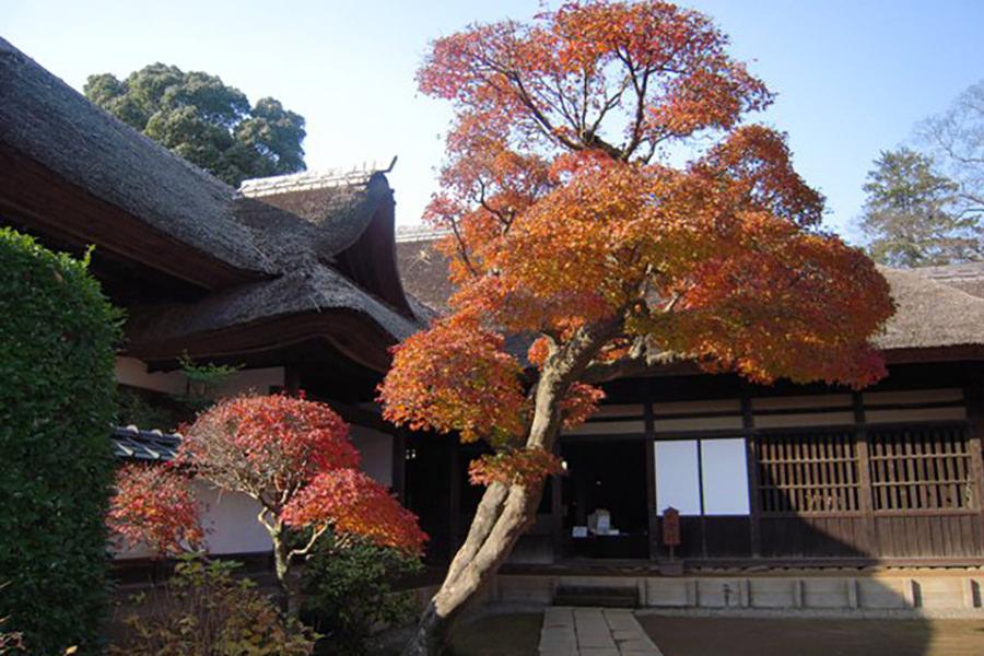 表門を潜り進むと、江戸時代を偲ばせる総茅葺きの重厚な主屋と色づいた紅葉が出迎えてくれる