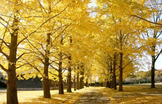 【2021年版】秋の茨城県をめぐる紅葉スポット9選