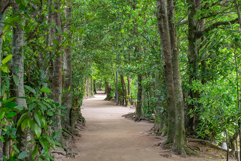 森林浴気分が味わえる並木道。自転車で駆け抜けるのも気持ちが良い