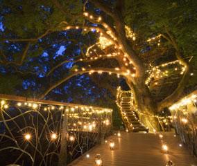 「森の空中基地くすくす」ライトアップ