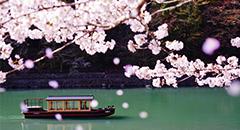 桜のシーズン到来!<br />開花情報&#038;春の魅力をお届け