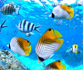 ランギロア島の色鮮やかな魚たち