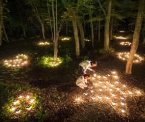 晩秋の森を照らす「フェアリーロード」