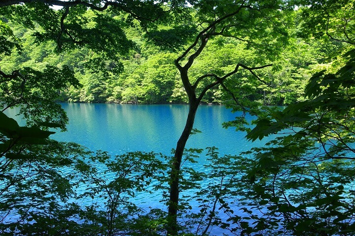 森の目覚めに出会う「国立公園早朝プレミアムツアー」 奥入瀬渓流ホテル