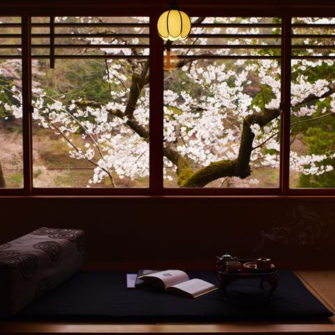 京都で愉しむ桜滞在