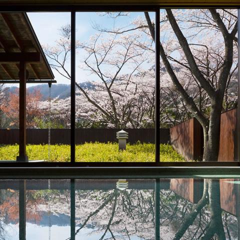 満開の桜並木を望む花見露天風呂