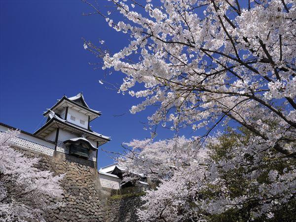 【界 加賀】開業1周年の北陸新幹線で加賀百万石のお花見旅