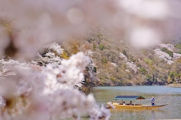 【星のや京都】とっておきの桜に出会う「桜舟でお花見ランチ」開催