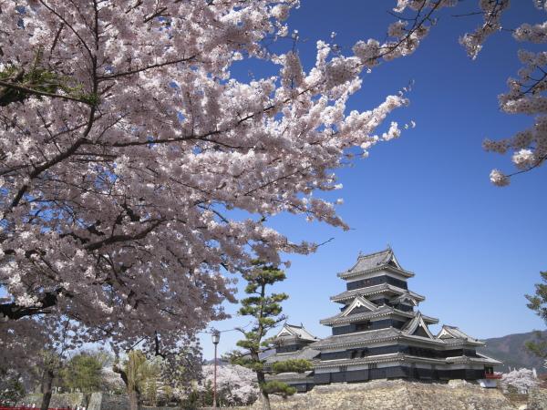 【界 松本】国宝松江城と桜の春の競演