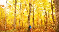 秋の東北旅