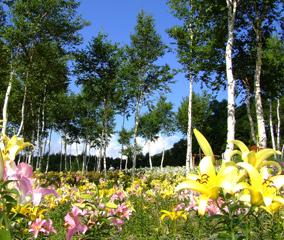 400万輪のゆり畑を訪ねる夏の栃木旅
