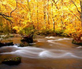 錦繍の秋は「紅葉最前線ツアー」へ