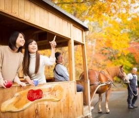 紅葉とりんごを楽しむ公園巡り馬車