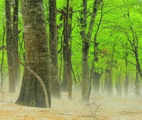 神秘の森で感じる春の生命力