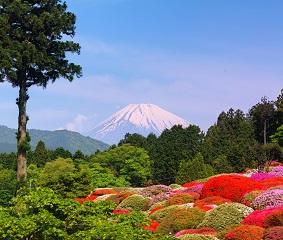 ツツジと富士山を愛でるGW