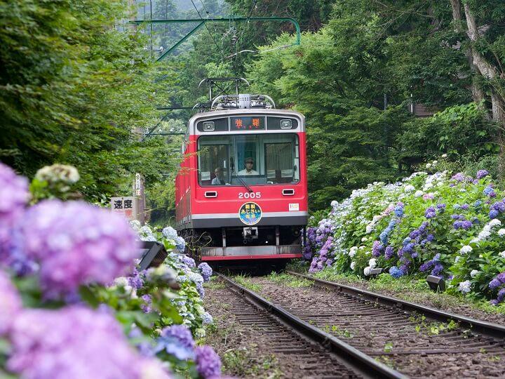 箱根登山鉄道とあじさい