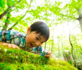 苔博士になって森を知る「苔キッズ」