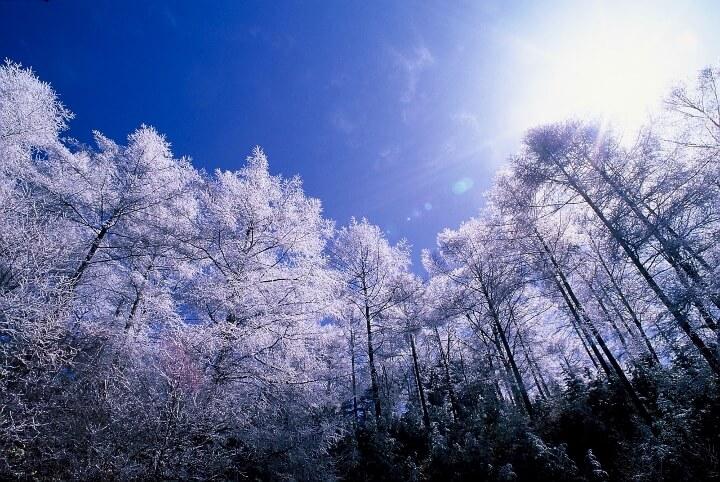 カラマツ霧氷2(4.8M) (720x482)
