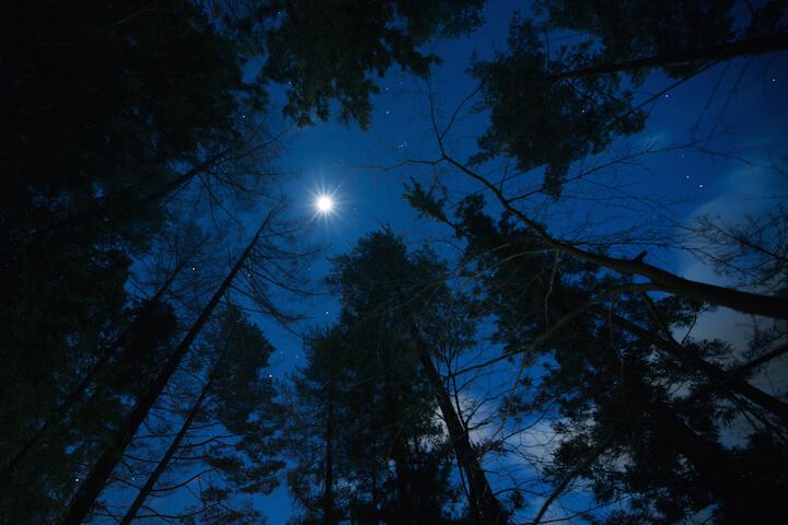 【星のや富士】冬の森と夜空イメージ