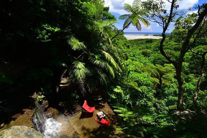 ジャングルバトラーお薦め冬の西表島 「ジャングル散策ツアー